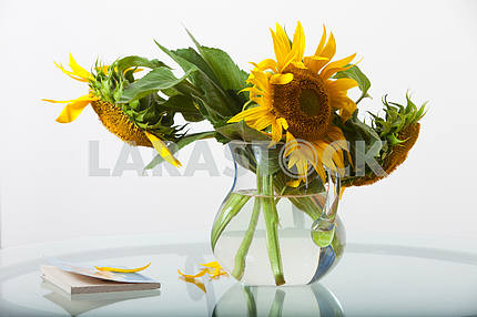 Sunflowers in a jug on a glass table