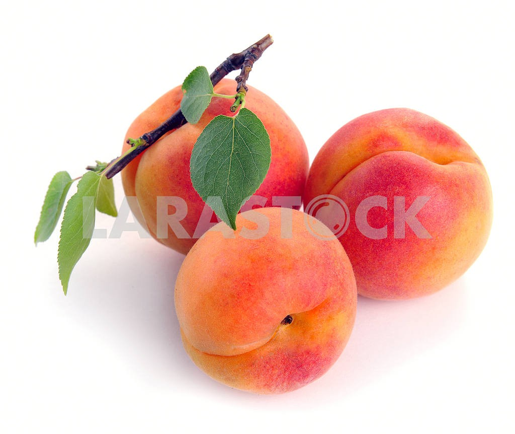 Apricot with leaves — Image 2284