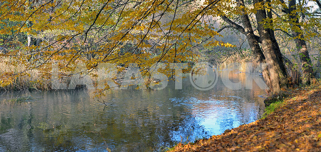 River in beechen autumn wood — Image 2346