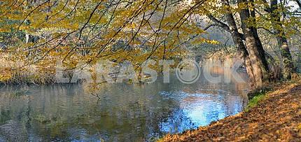 River in beechen autumn wood