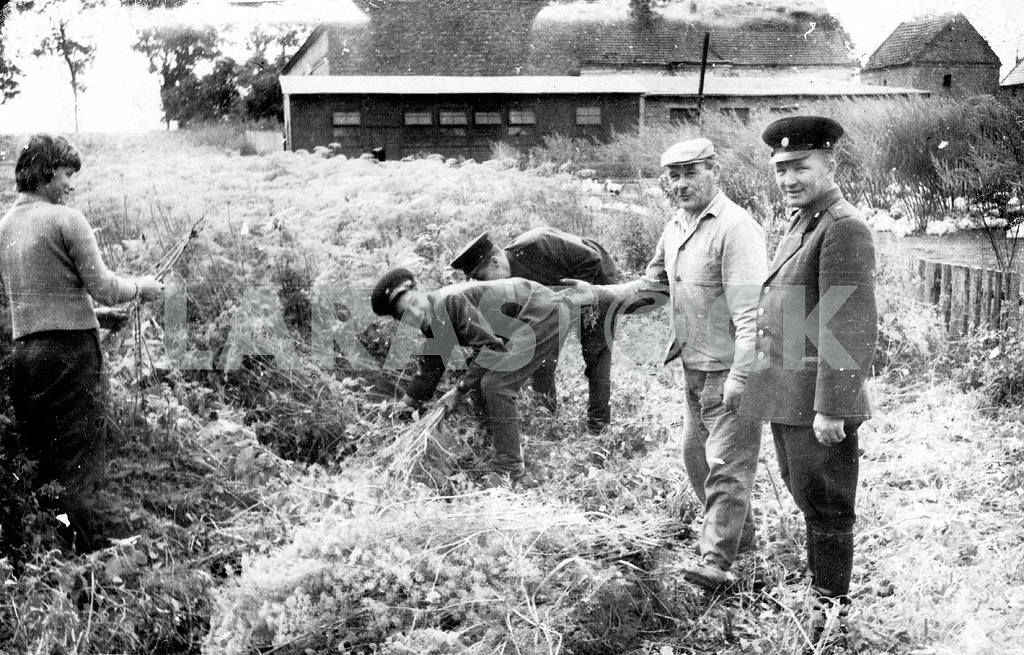 Soviet soldiers clearing ground from plants. — Image 23485