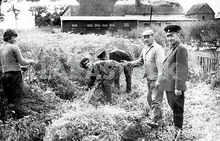 Soviet soldiers clearing ground from plants.