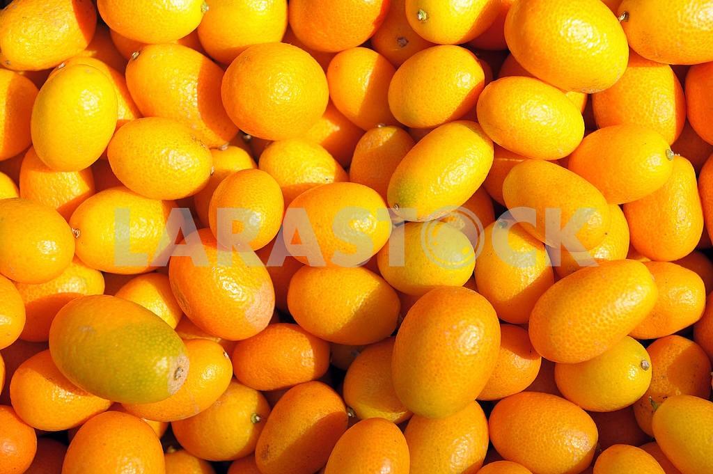 Ripe kumquat — Image 2412