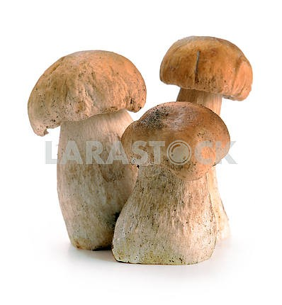 Ceps mushrooms