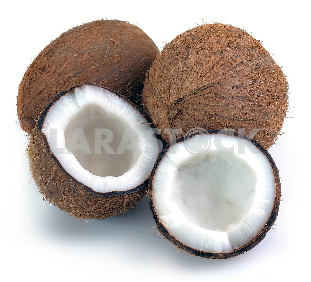 Coconut — Image 2601