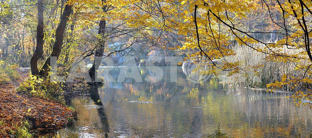 Mountain river in beechen autumn wood — Image 2658