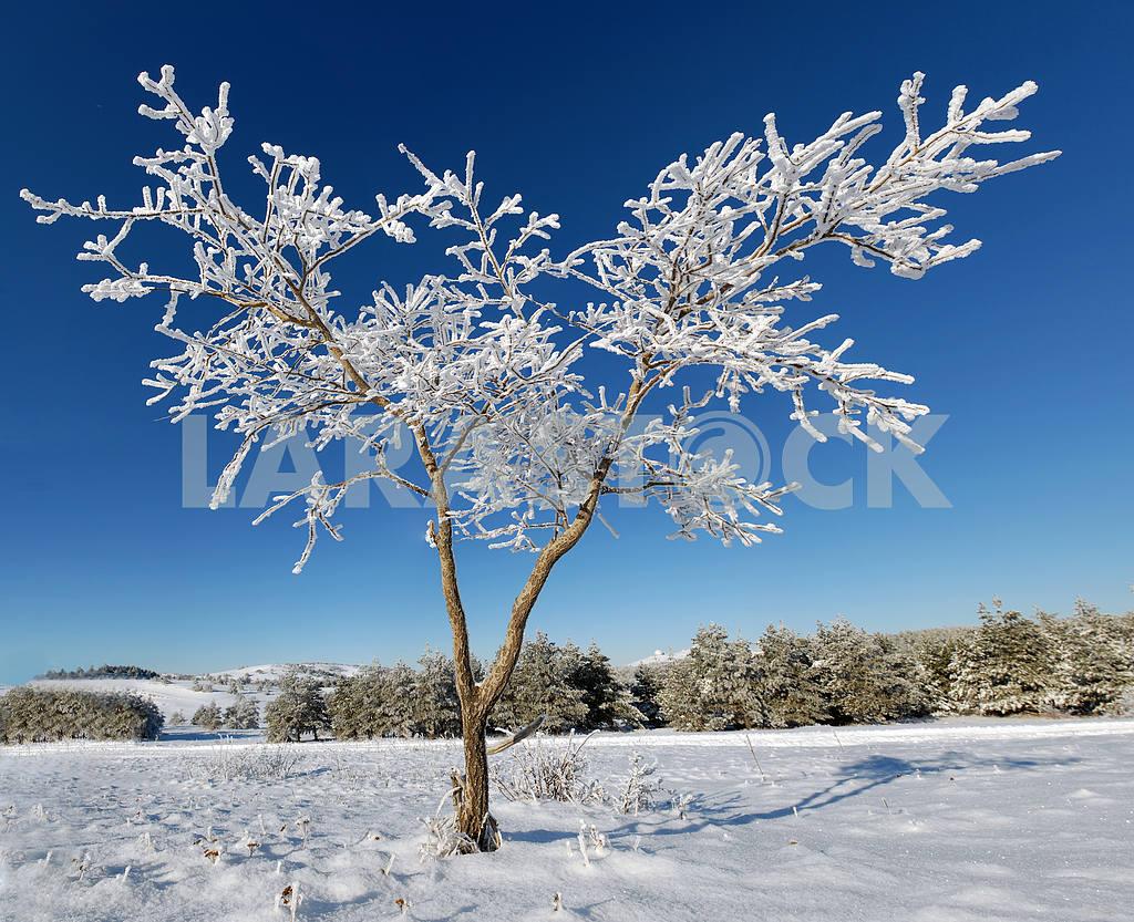 Winter tree  — Image 2700