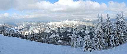 Panorama of the winter forest of Carpathians