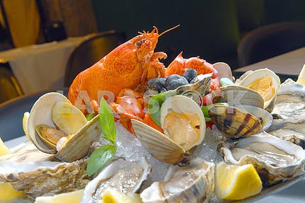 """""""A cocktail from seafood"""" with lobster"""