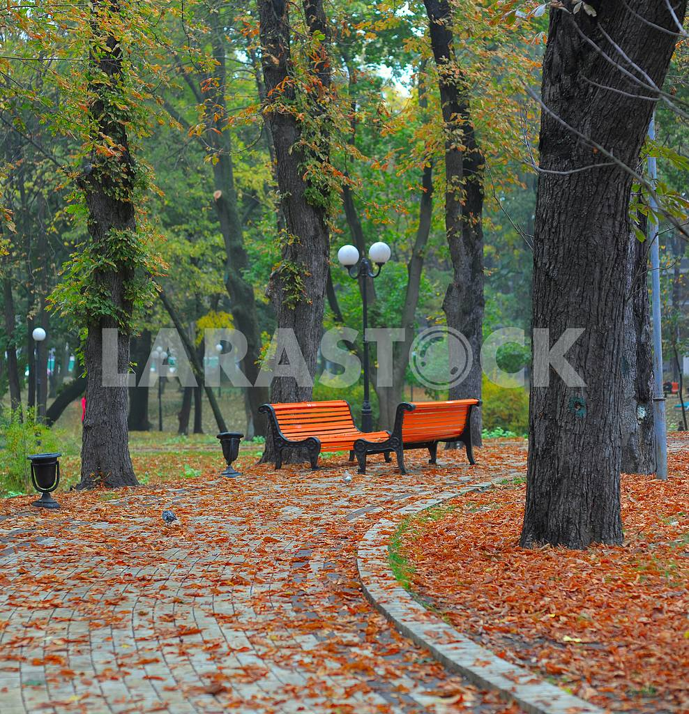 Benches in city park — Image 2741