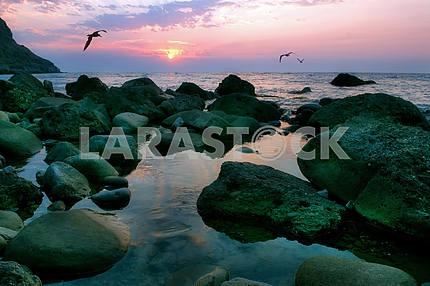 Seagulls fly against a rising sun
