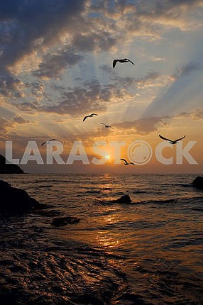 Чайки летают против восходящего солнца