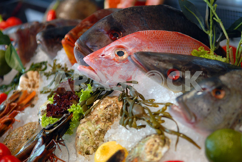 Витрина рыбы — Изображение 2778