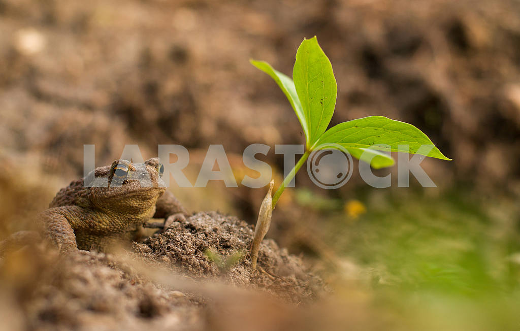 Toad — Image 28870