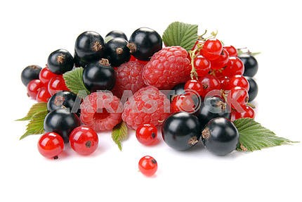 Raspberry , red and black currant