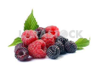 Red and black raspberry with leaves