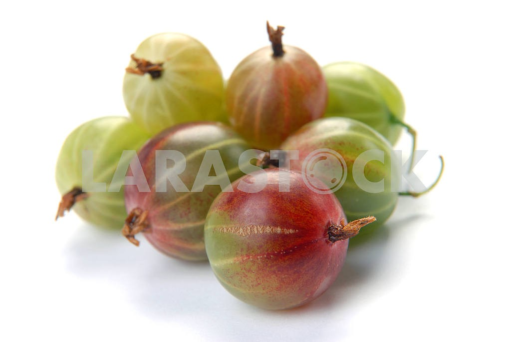 Ripe gooseberry  — Image 2978