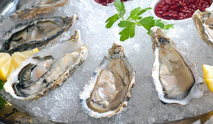 Oysters in ice