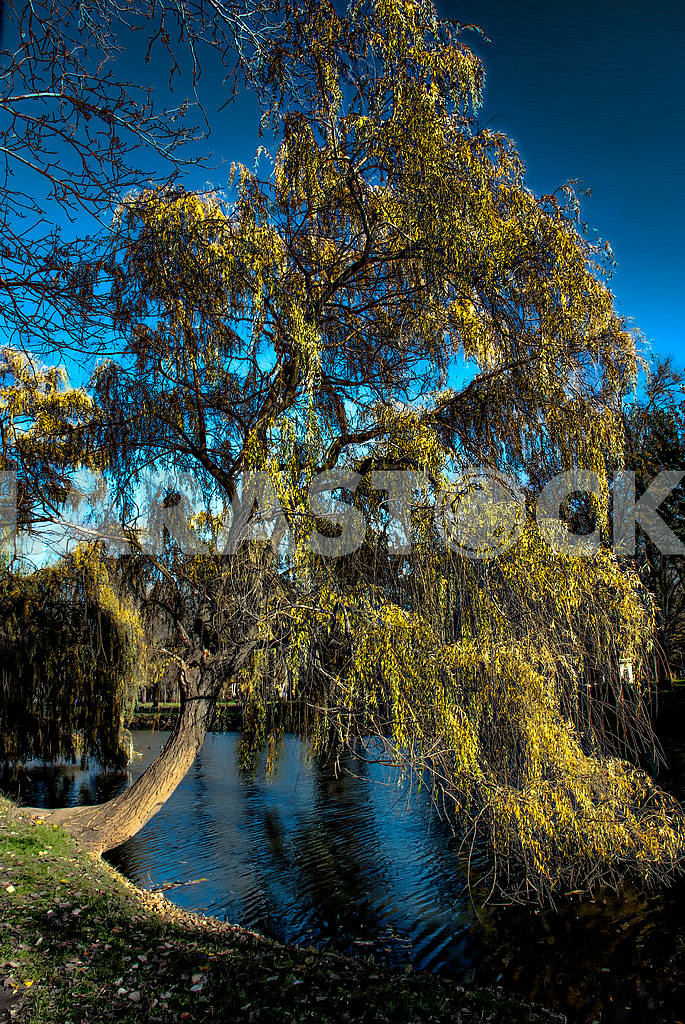 Tree on the river bank — Image 30793