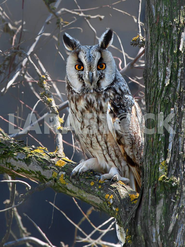Owl — Image 31366