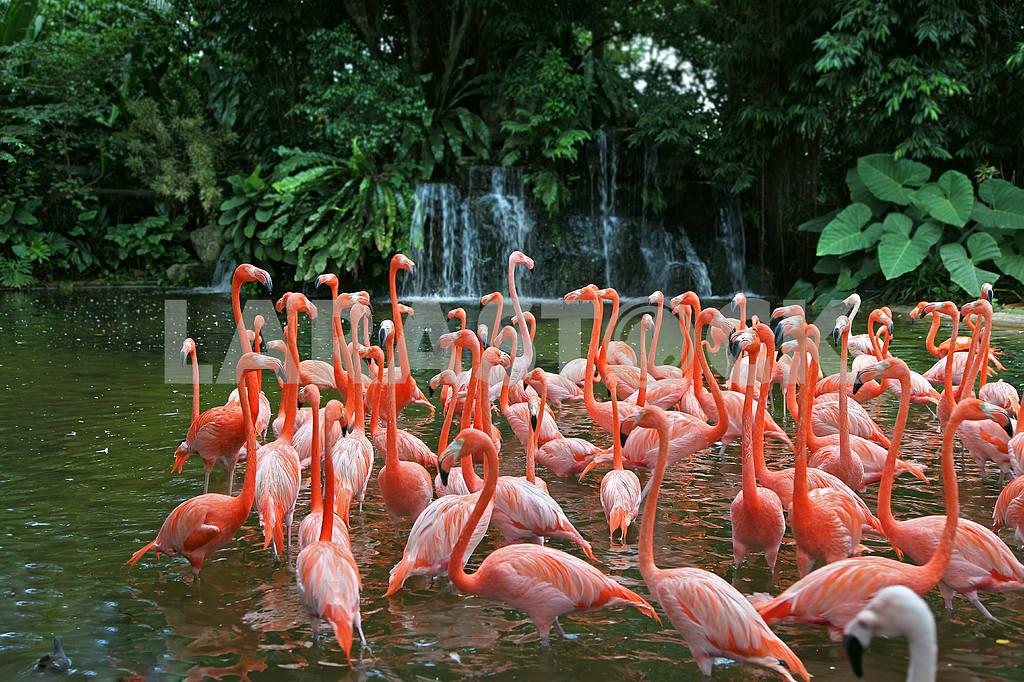 Flamingo — Image 31370