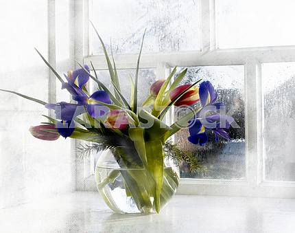 Bouquet in a round transparent glass vase of blue irises and red tulips on a background misted window
