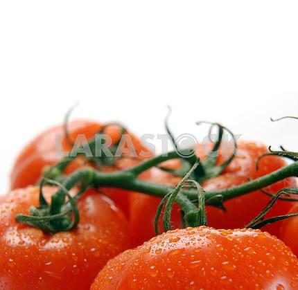Красные помидоры на ветке с каплями воды