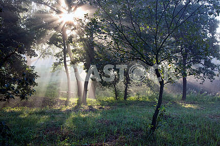 The sun's rays in the forest