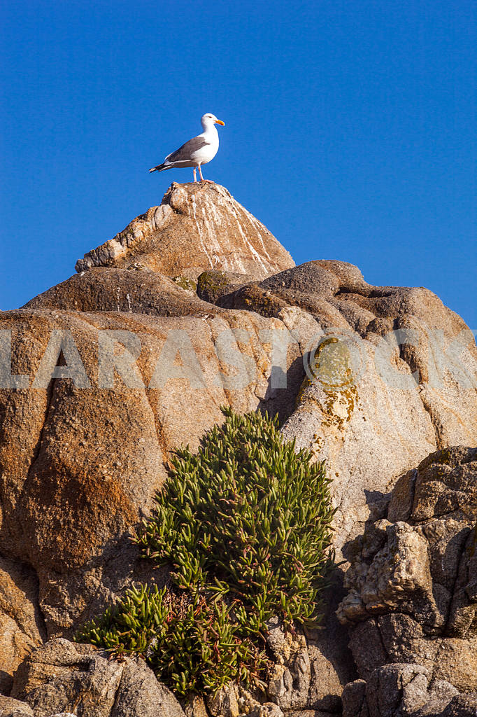 Seagull is standing on a rock with sky background — Image 32828