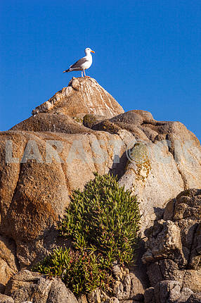Seagull is standing on a rock with sky background