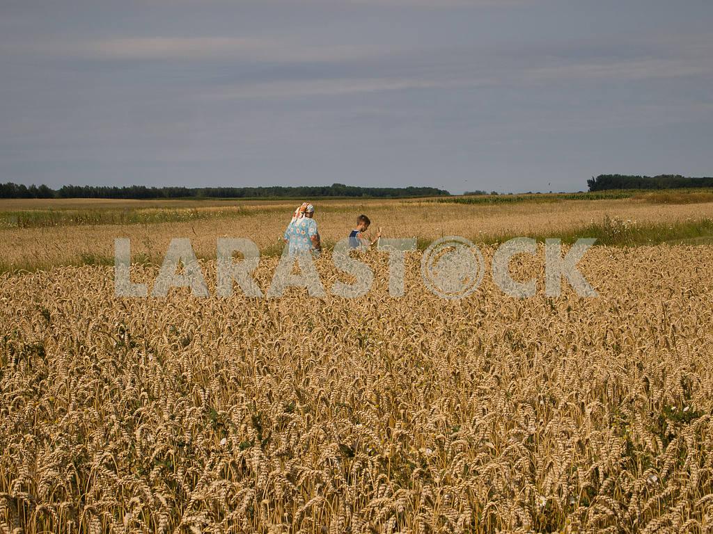 Ripe harvest — Image 32860