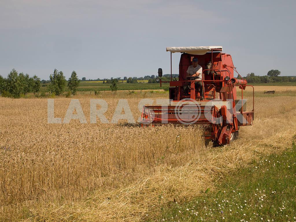 The harvest — Image 32869