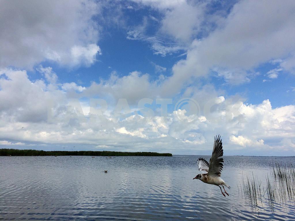 The islands of Saaremaa and Muhu — Image 32996