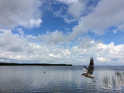 The islands of Saaremaa and Muhu