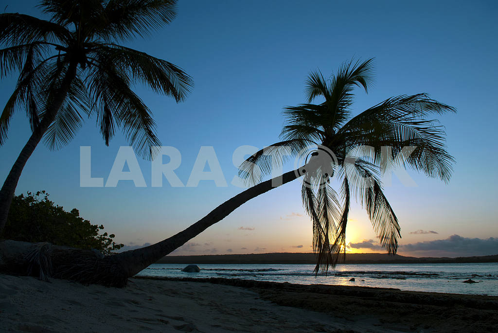 Sunrise in the tropics with palm trees — Image 33028