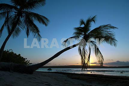 Восход солнца в тропиках с пальмами