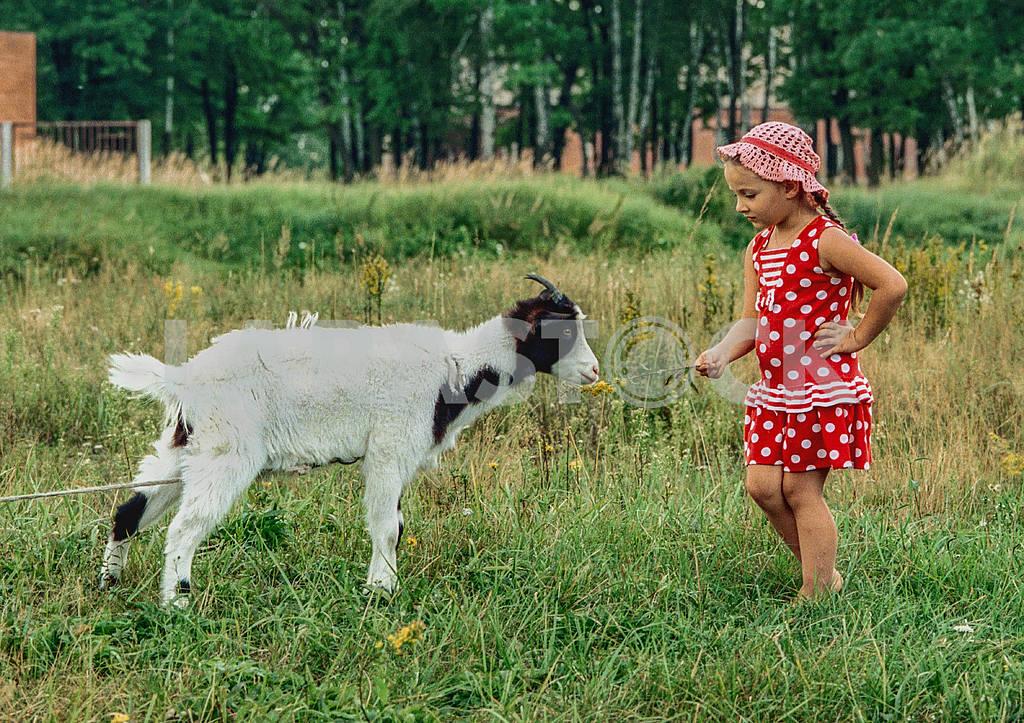 Girl feeding a goat — Image 33165