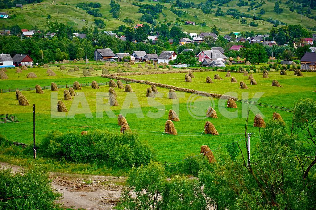 Hay Carpathians. — Image 3386