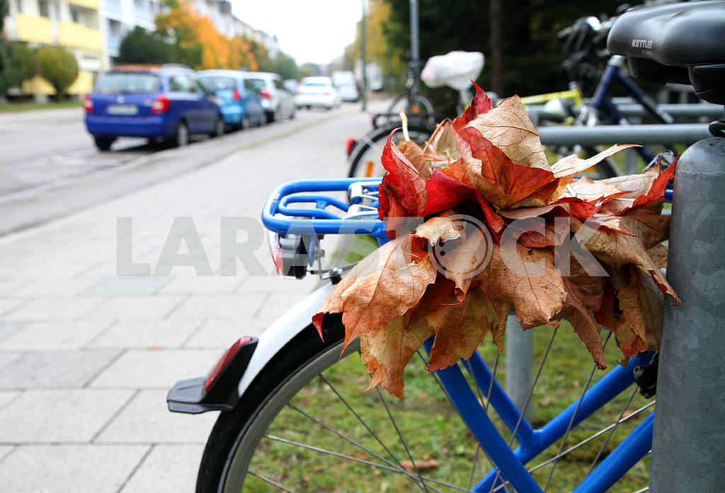 Autumn leaves on the trunk of a bicycle — Image 33921