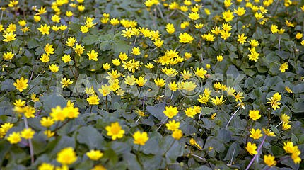 Yellow spring flowers.