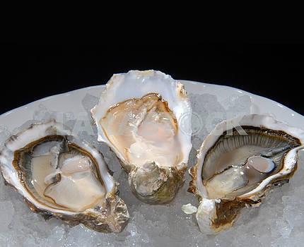 Oysters on a plate with ice