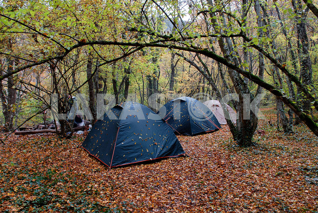 Three wet tents in wood in the rain — Image 3538