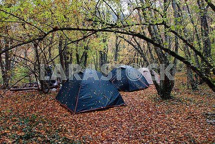 Three wet tents in wood in the rain