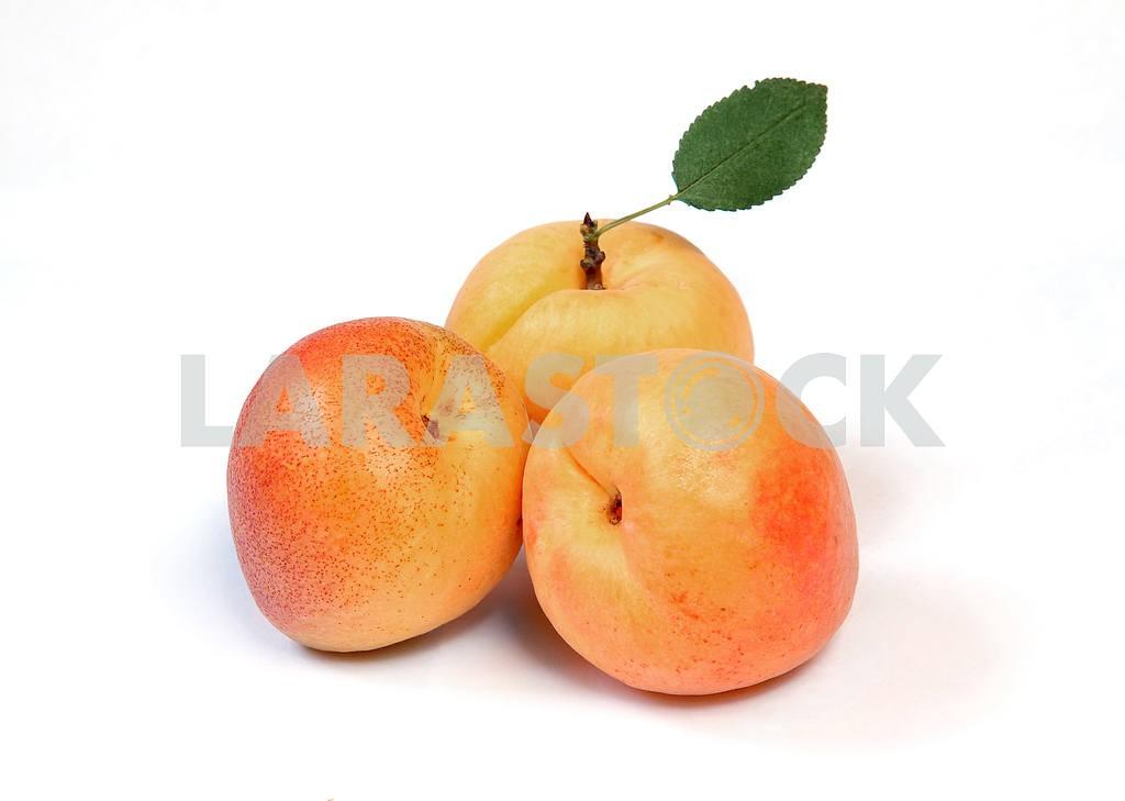 Apricotd — Image 3544