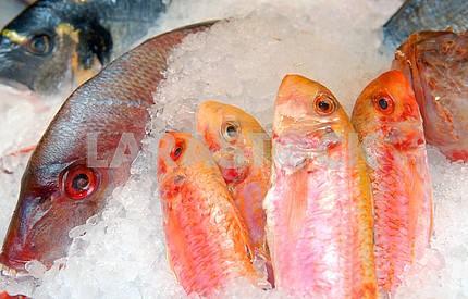 Витрина морепродуктов
