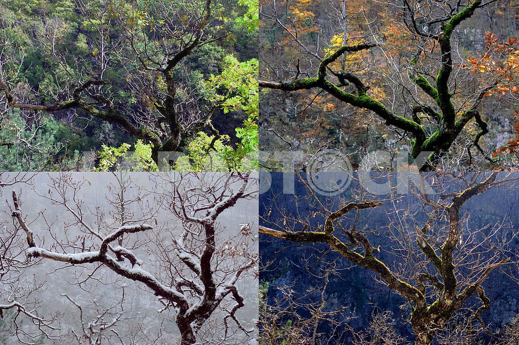 Four seasons — Image 3650