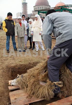 Muslims sacrifice the sheep near a mosque