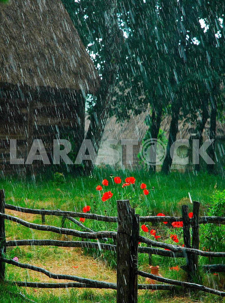 Summer rain — Image 36903