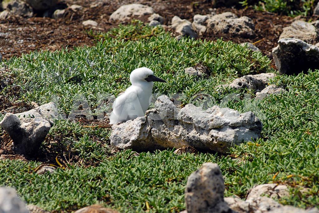 Small baby bird near a nest — Image 3798