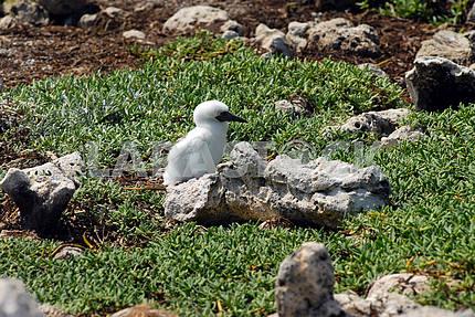 Small baby bird near a nest